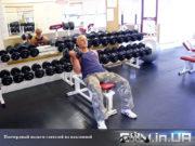 База Упражнений: Поочередный подъем гантелей на наклонной скамье