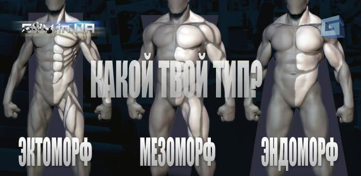Лучшие упражнения по типу телосложение для эктоморфа энжоморфа и мезоморфа