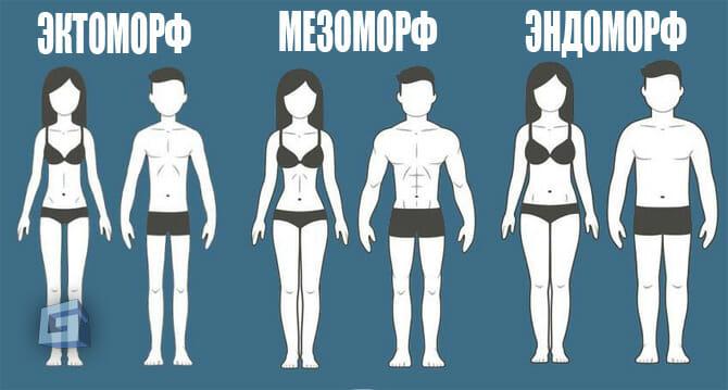 Какой твой тип телосложения: эктоморф, мезоморф или эндоморф