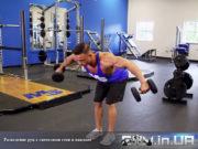 Упражнение: Разведение рук с гантелями стоя в наклоне